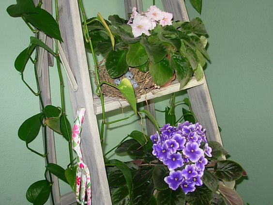 Growing flowers inside for a pretty room.