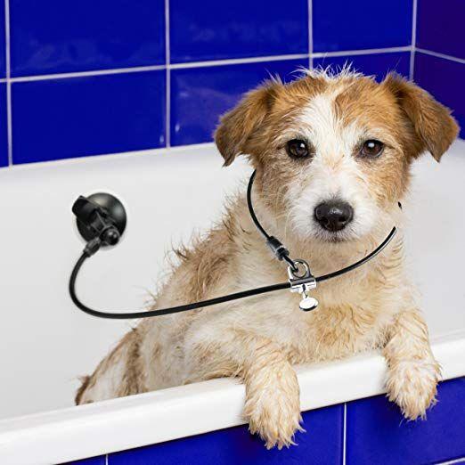 Amazon Com Dog Bathing Suction Tether Leash With Collar Keeps