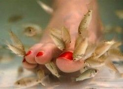 A fish pedicure treatment could be just what you need to get your feet fresh and feeling like new again! Garra ruffa fish, or Doctor Fish, as they are also known, remove the dead skin cells from your tired feet and leave them smooth and fresh.