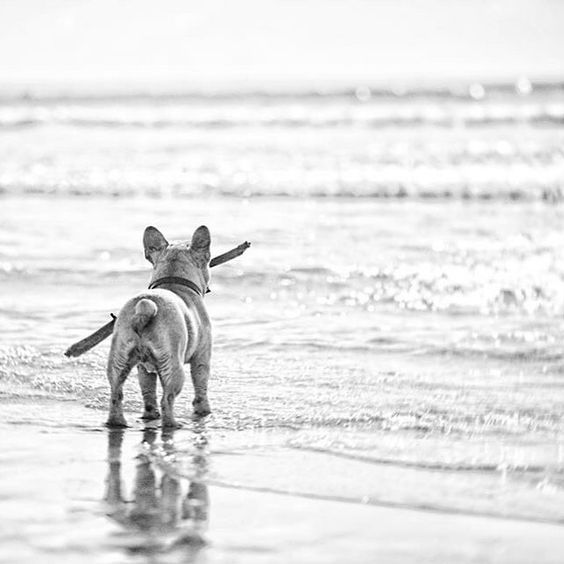 Pin By Passin Thyme On Summer Days With Images Dog Beach Friend Tattoos Dog Love