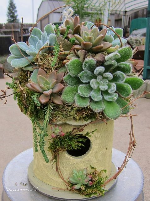 Love the birdhouse with succulents