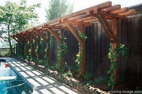A Trellis Anchored Along The Fence Minus The Pool Of