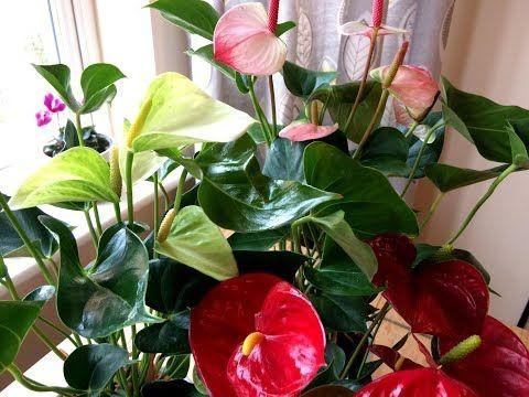 9 Roslin Oczyszczajacych Powietrze W Domu Zielone Filtry Kwiaty Doniczkowe Latwe W Uprawie Youtube Indoor Plants Plants Make It Yourself