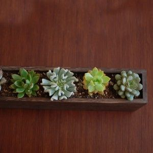 Succulent - natural http://pnnd.co/pin-1404