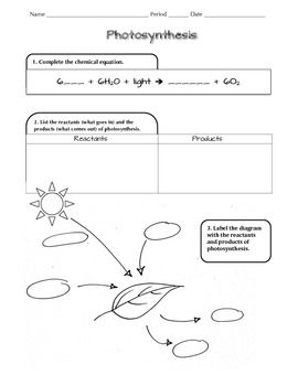Printables Photosynthesis Worksheet photosynthesis worksheet pdf google