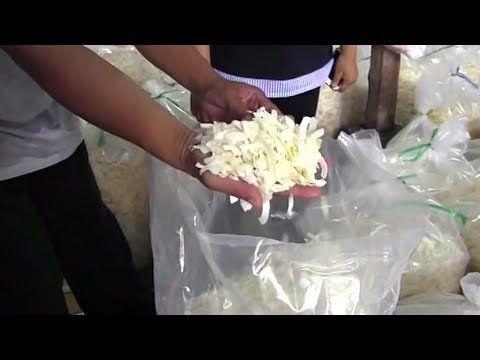Bisnis Kripik Kelapa Sukses Menghasilkan 1 Ton Tiap Hari Youtube Kelapa Resep Masakan Indonesia Cemilan