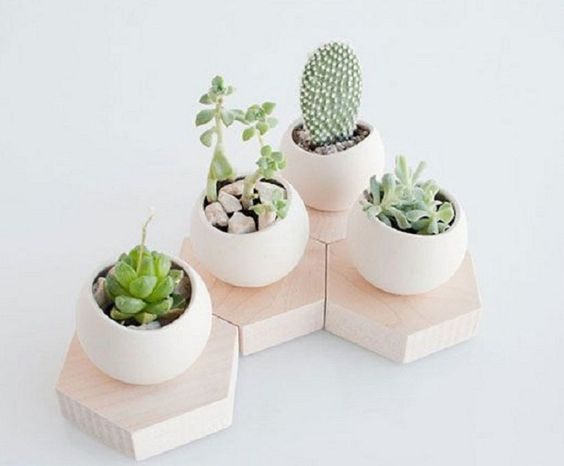 Cómo decorar con plantas suculentas, ¡me encantan!