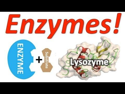 Enzymes: Mr. W's Enzyme Song - YouTube