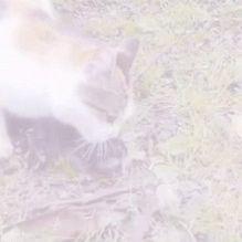 bir kedi yavrularını,erkek kedilerden ve insanlardan korumaya çalışıyor