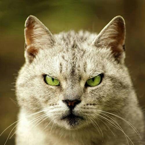 Mad cat.LOL LOL @ Kinsley