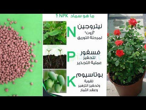 معلومات هامة عن سماد Npk Youtube Make It Yourself Plants Agriculture