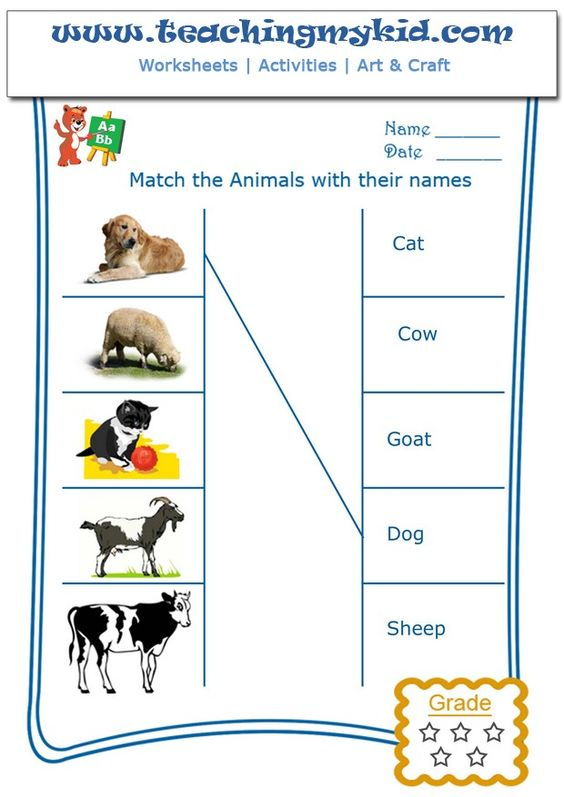 match the domestic animals with their names worksheet 1 pinterest kid. Black Bedroom Furniture Sets. Home Design Ideas