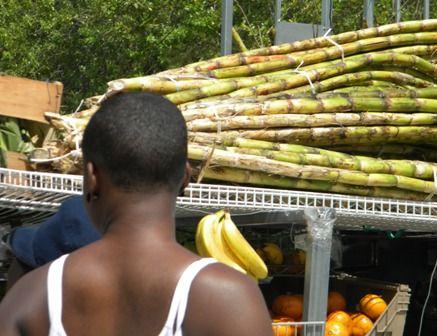 Sugar cane in Farmer Market in Little Haiti, Miami