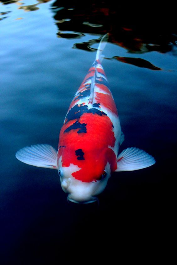 Aquarium Ikan Air Tawar Binatang Lucu Binatang