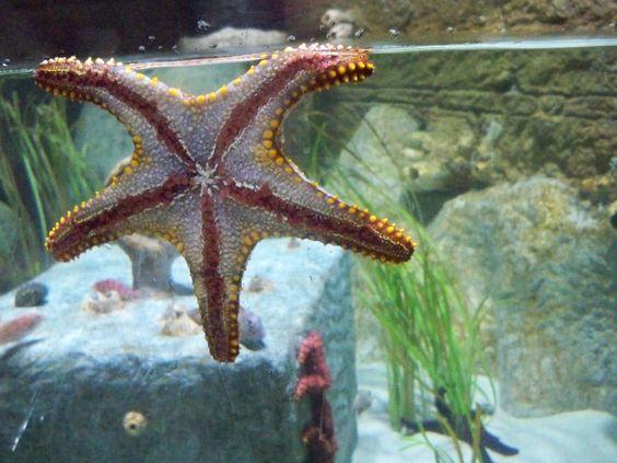 Starfish From The Sea Life Aquarium In Tempe Az Nature