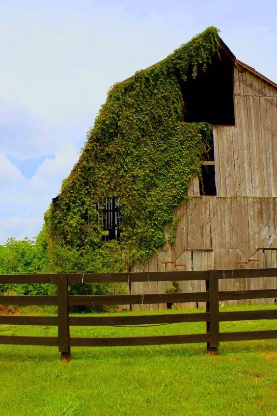 Ivy gambrel barn beauty