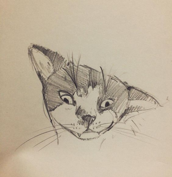 She is a girl and her name is Booger.  by friend'd cat