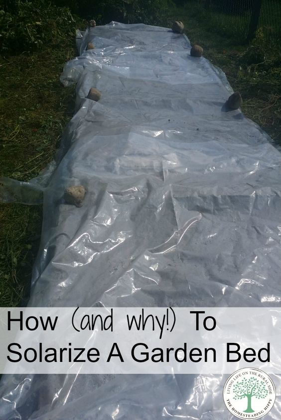 Get your garden soil prepared and help eliminate unwanted pests, weeds or seeds by using the power of the sun! Solarize your garden beds and get the best soil possible! The Homesteading Hippy via @homesteadhippy