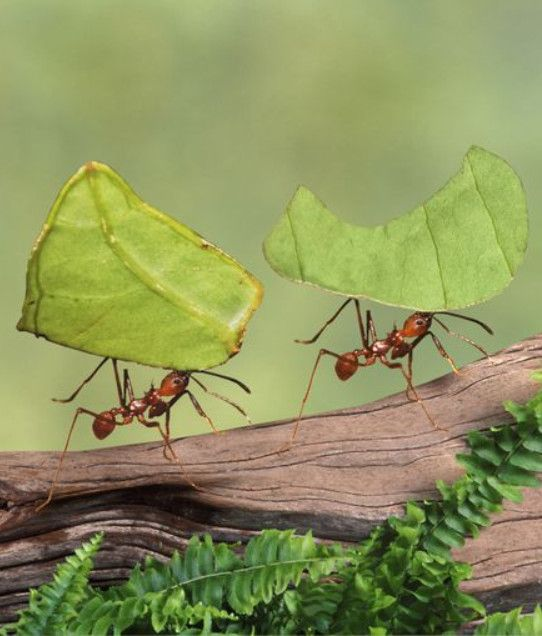 10 Fascinating Facts About Ants Ants Insects Theme Ant Insect