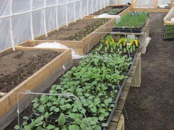 Blog   Hedgerow   Food, Plants, Gallery and Landscape Design in St. George, Maine Hoop House