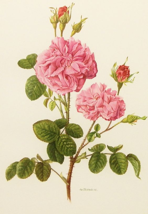 Rose Art, Vintage Bota...