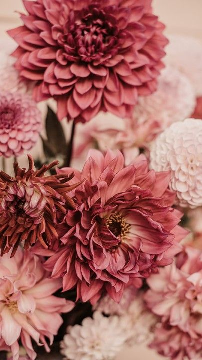 Download Iphone Xs Iphone Xs Max Iphone Xr Hd Wallpapers Dahlias Flowers Bouquet Pink Free Wall Flower Wallpaper Flower Aesthetic Flower Phone Wallpaper