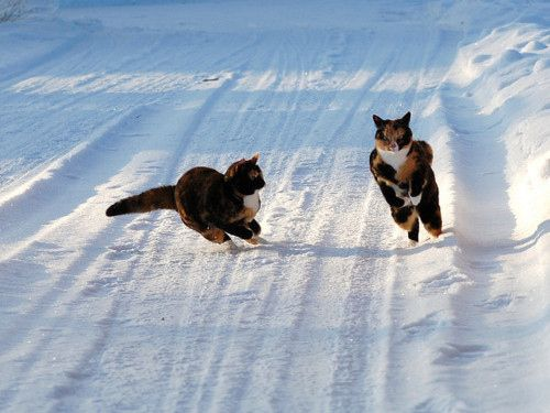 """* * CAT IN ROAD: """" Wassa mattah?"""" [STANDING CAT: """" Step back. Me be gonna hurl  a hairball de size of a snowball. [groan] """""""