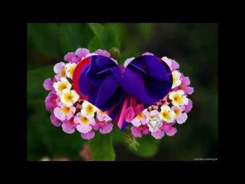 Samye Krasivye Cvety V Mire Youtube Krasivye Cvety Cvety Ekzoticheskie Cvety