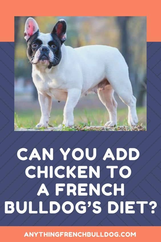 Can You Add Chicken To A French Bulldog S Diet In 2020 French Bulldog Bulldog Diy Dog Food