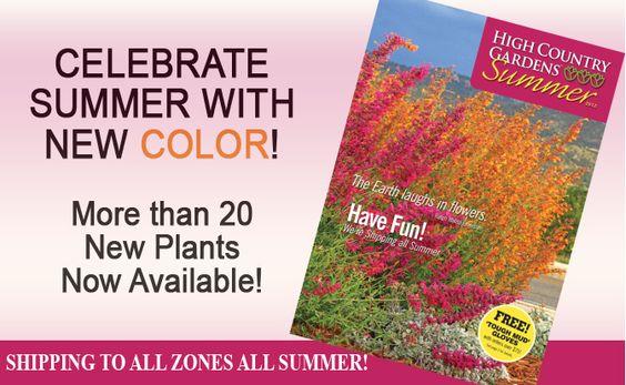 New Summer 2012 Plants
