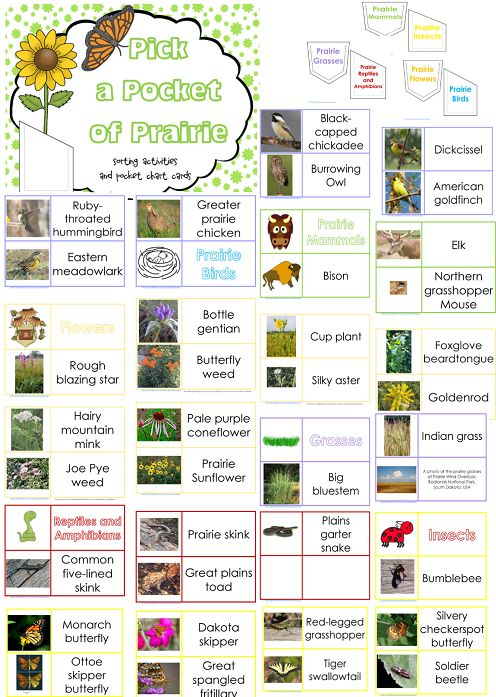 Pick a Pocket of Prairie - 40 free sorting and interactive notebook pages from Wise Owl Factory
