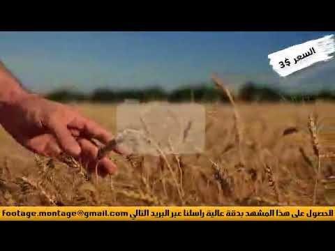 مشهد عن النماء لأعمال المونتاج 16 Holding Hands Hands Ale
