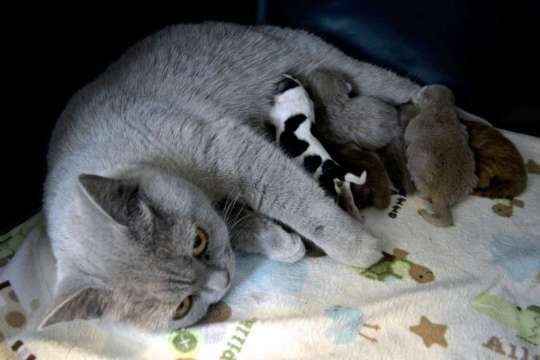 Cat Nurses Puppy After Mother Dog Cannot Produce Milk Puppies Cats Kittens And Puppies