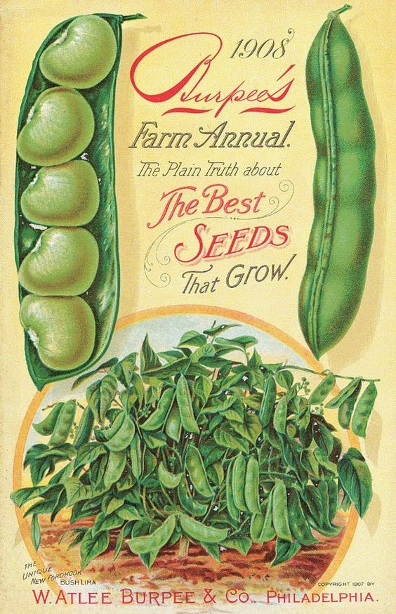Vintage Burpee's Seed Catalogue 1908