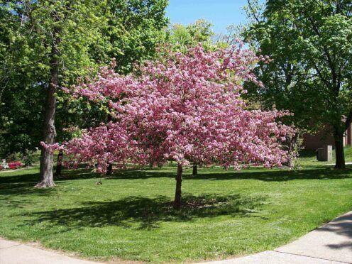 Pin By Adam Nixon On Spring Spring Scenery Tree Photography Beautiful Tree