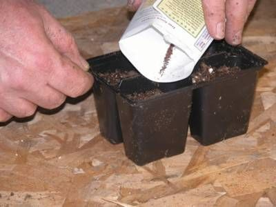 Seed Starting - How to Successfully Start Plants from Seed