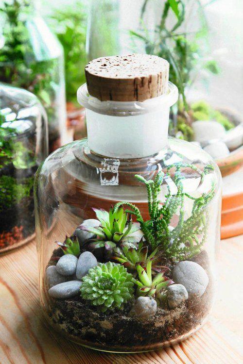Ogródek w szkle