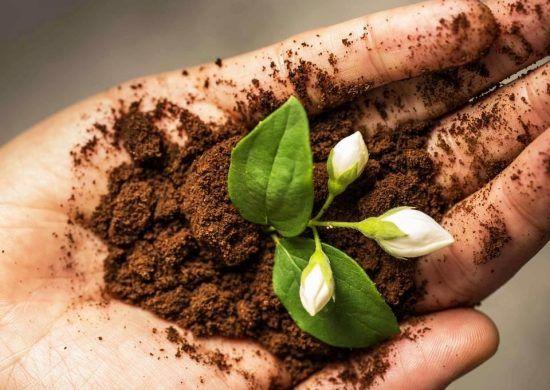 Richtig Und Vielfaltig Kaffeesatz Als Dunger Im Garten Anwenden Wohnideen Und Dekoration Kaffeesatz Hausmittel Gegen Unkraut Kompost Herstellen
