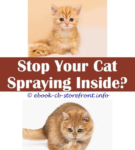 1d0e1c89fb777fc6a6c30bc47b85511c - How To Get Rid Of Cat Spray Smell Under House