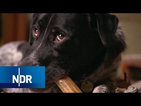 45 Min Haustier Hund Wahnsinn Oder Liebe 2018 45min Gesellschaft Haustiere Hd Hunde Ndr Tiere Hunde Haustier Hunde Tag