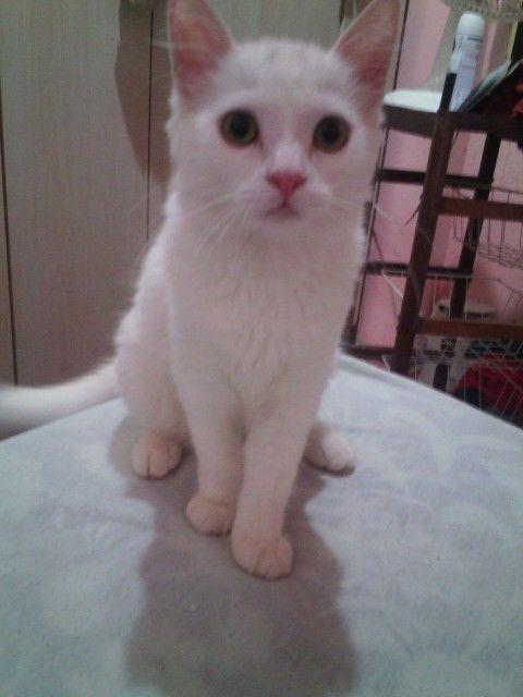 Luna -  gatinha mais linda