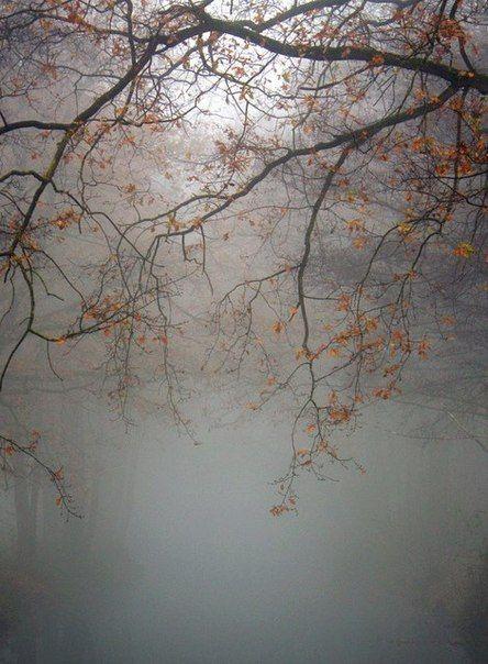 November Mist: