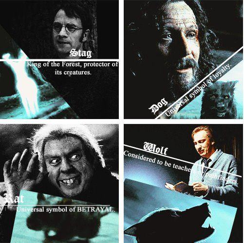 Moony, Wormtail, Padfoot and Prongs | Harry Potter | Pinterest