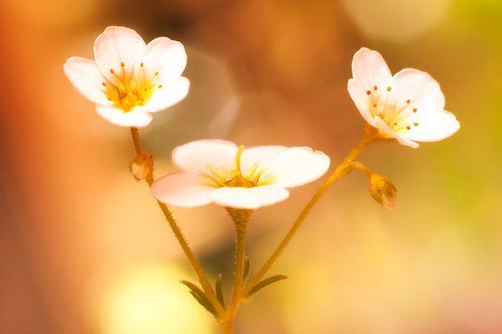 White Beauties Null Flowers Beauty Macro Photography