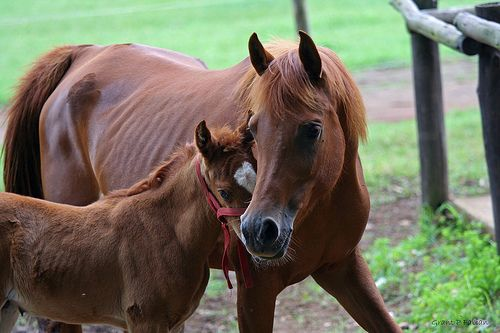 HORSING AROUND (Mom and Baby) - http://www.1pic4u.com/blog/2014/09/08/horsing-around-mom-and-baby/