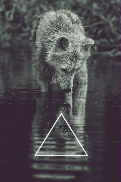 Lone Wolf Wallpaper Iphone Wolf Wallpaper Nature Photography Animals Iphone Wallpaper Tumblr Hipster