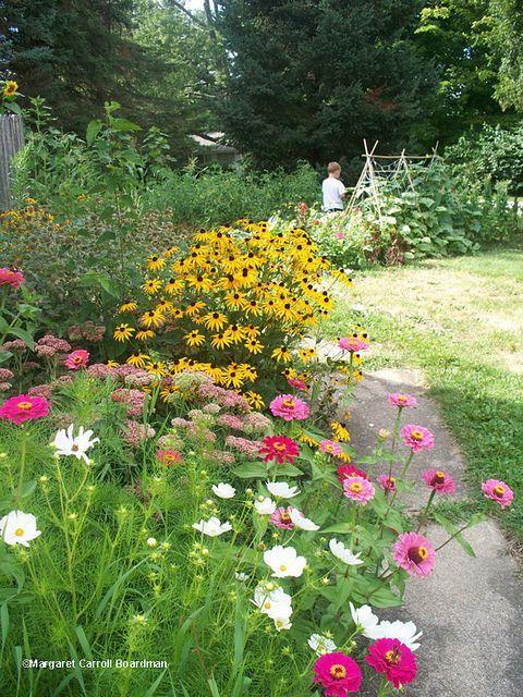 summer perennials for border flower beds