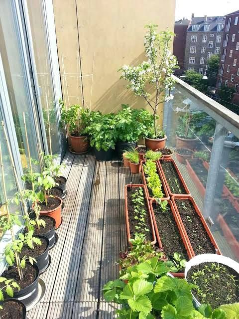 Image Result For Garden Ideas India Small Balcony Garden Apartment Balcony Garden Patio Garden Design
