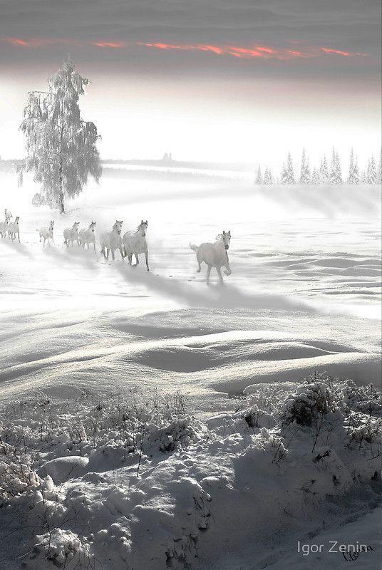 Cheval des neige: