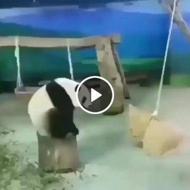 Como o King Fu Panda treina para suas batalhas com inimigos